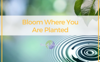 41 – Bloom Where You Are Planted